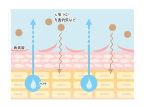 頭皮の水分